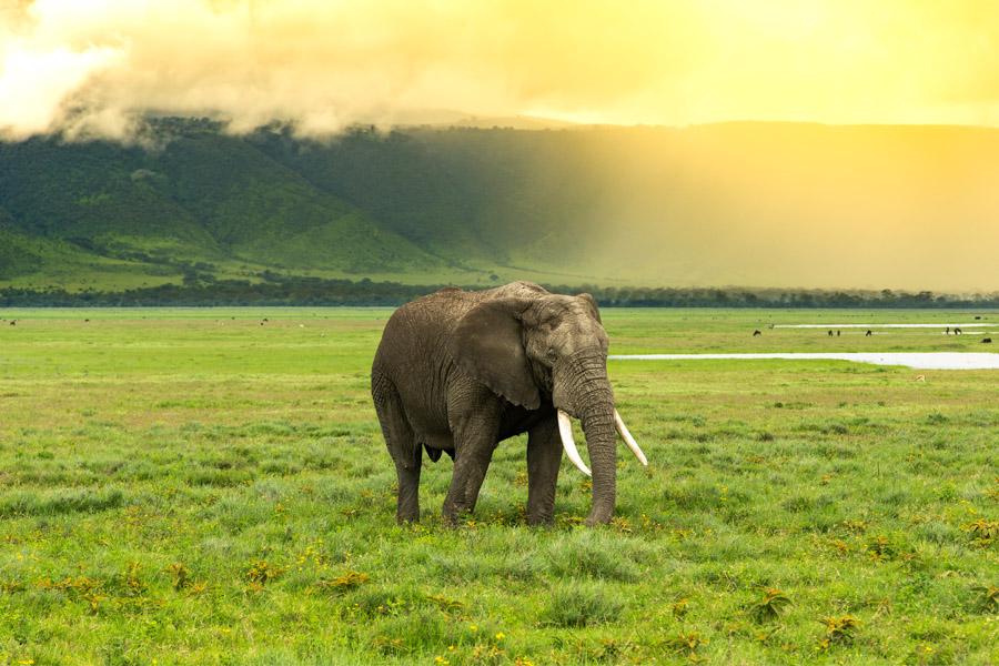 Safari game drive Ngorongoro crater