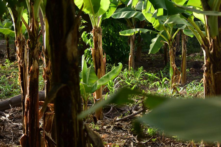Farm Tour – Mto Wa Mbu