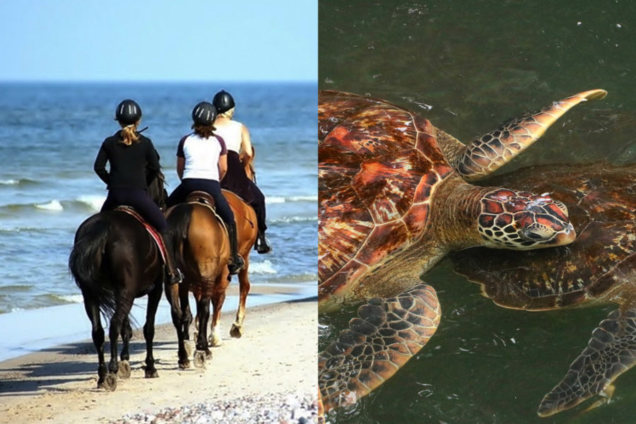 Horse back riding Nungwi (morning beach ride 90 min.) and Nungwi turtle aquarium.