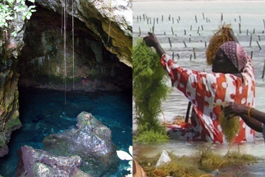 Kuza Cave and SeaWeed farm