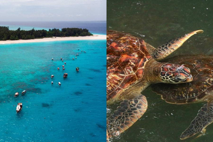 Mnemba snorkelling and Nungwi turtle Aquarium