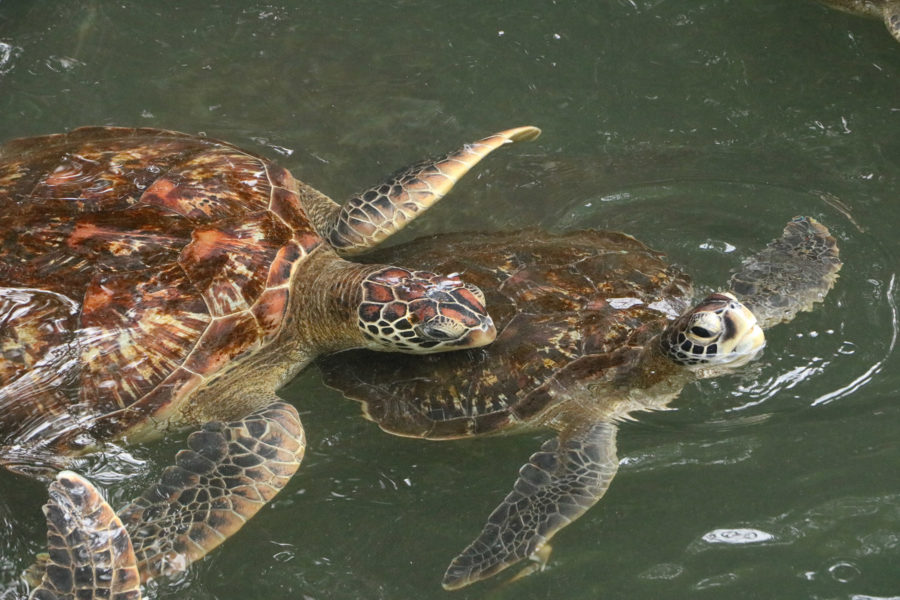 Nungwi Turtle Aquarium