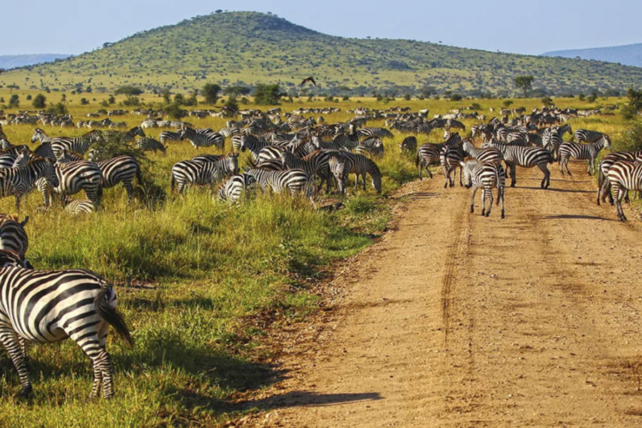 Serengeti 3 days 2 nights 2 days game drives fly-in/fly-back