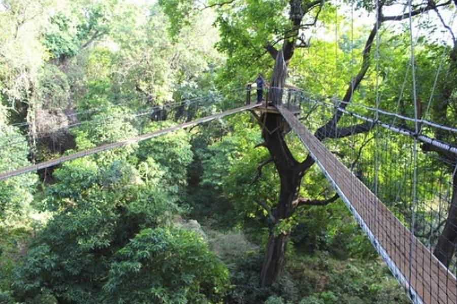 Tree top Walkway Lake Manyara