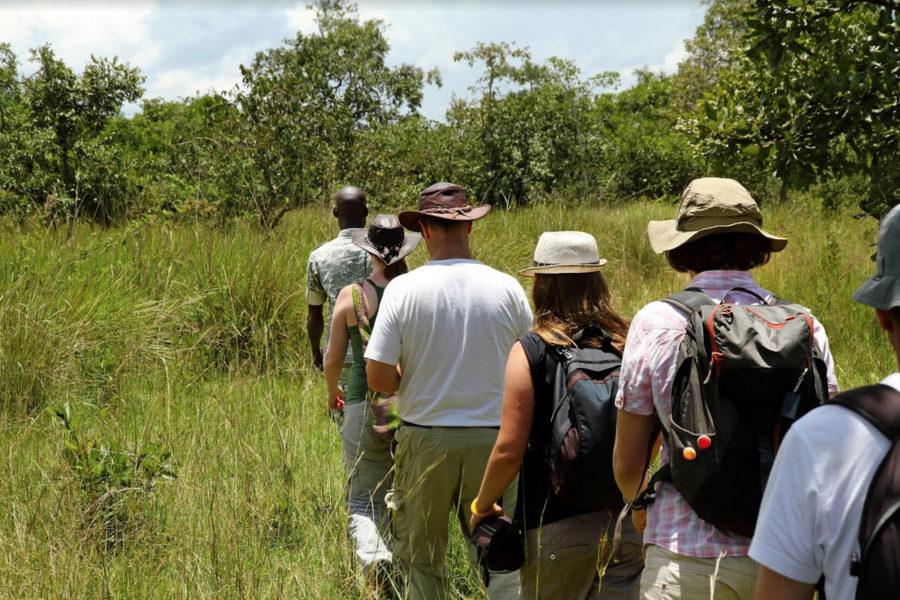 Walking Safari in Jangwani