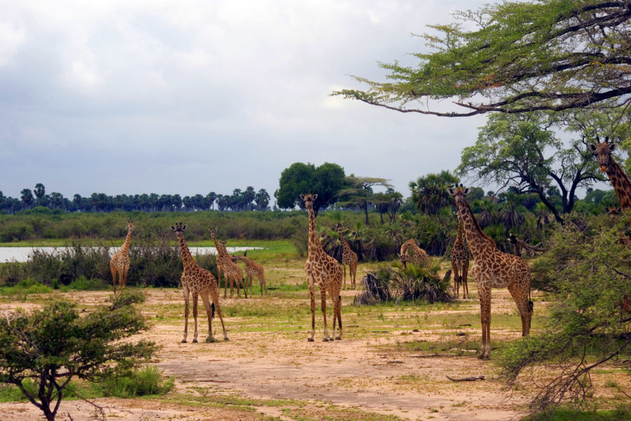 Selous 2 days, 1 night, fly-in/fly-back
